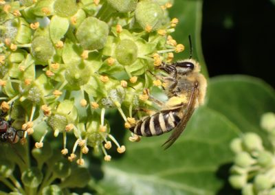 Bijenlandschap