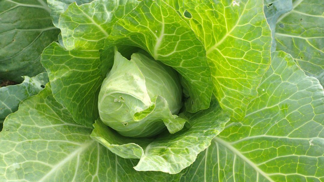 Teelt- en bemestingsadvies nieuwe bio-groentetuin