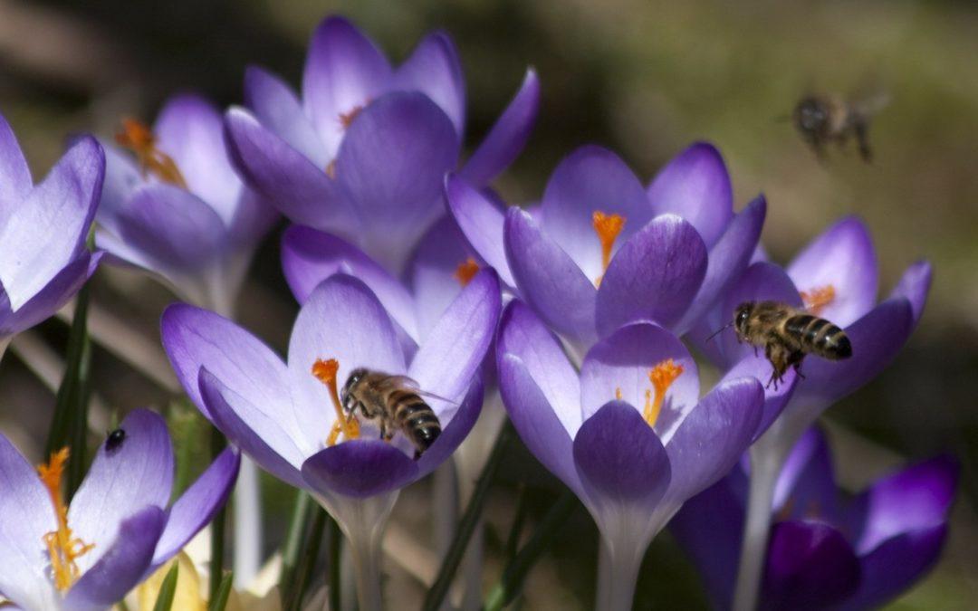 Biologische bloembollen kopen