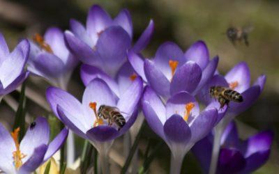 Biologische bloembollen kopen (2)