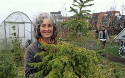 Hoe laat je een kerstboom overzomeren?