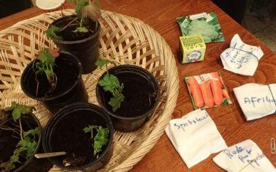 Zelf zaden kweken en ruilen: lezing en ruilbeurs – zaterdag 3 maart in Leiden