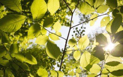 Plantengroei en zonneschijn hebben een relatie