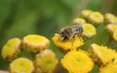 Tuinplanten verdroogd? Deze bijenplanten overleven een hittegolf wèl