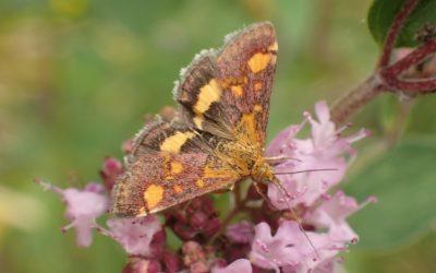 Open tuin op 1 juni – Velt Ecotuindagen