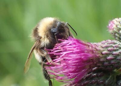 Workshop Bijen in de tuin, voor beginners
